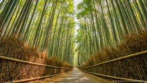 Japan-Kyoto-Photo-Locations